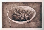 Jennifer Scheuer - Sweetgum - Photogravure - 6 x 8 in 2012 USA