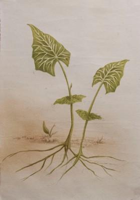 pea leaf